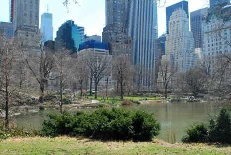 Central Park te midden van ...
