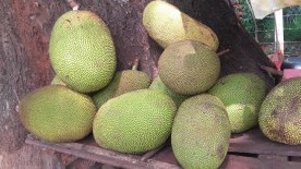 Jackfruits for sale on the Matale - Dambulla roadside