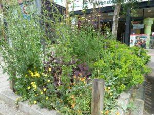 high st flower bed2