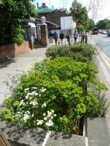 high street flower beds