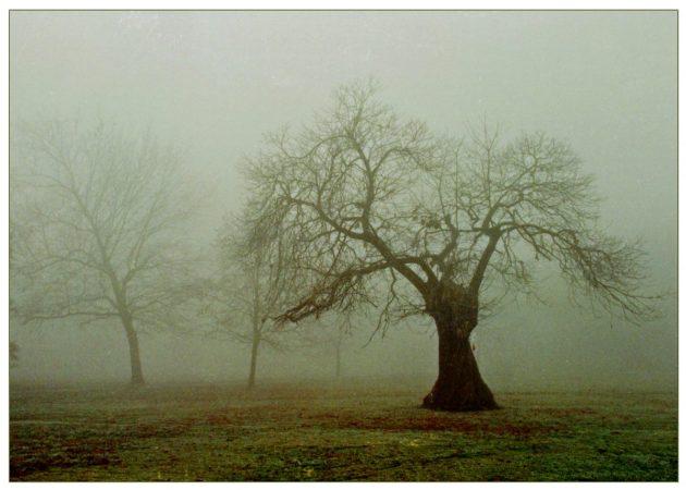 75greentree