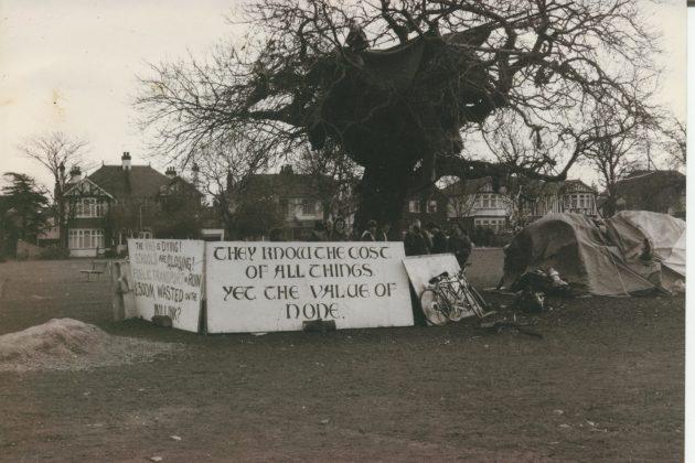 tree, public domain