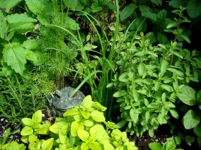 a productive garden is 2013 big thing.