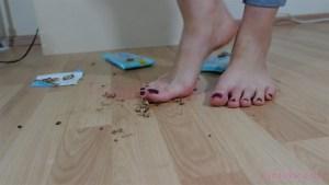 Crystal Barefoot Chocolate Crush