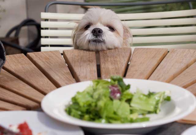 ドッグフードを食べない