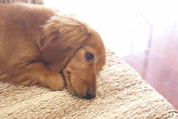犬の胃腸炎の治療法