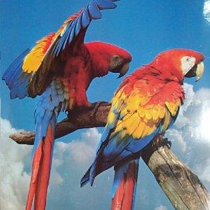 Macaws Pair