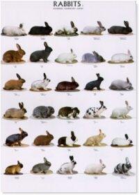 Rabbits Poster #2