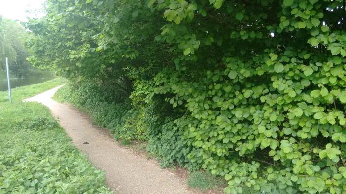 Walk peace garden