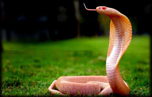 سانپ کے زہر مرض کا علاج