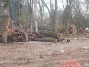 End of Ghent Street tree stand - Ward 2 News Burlington