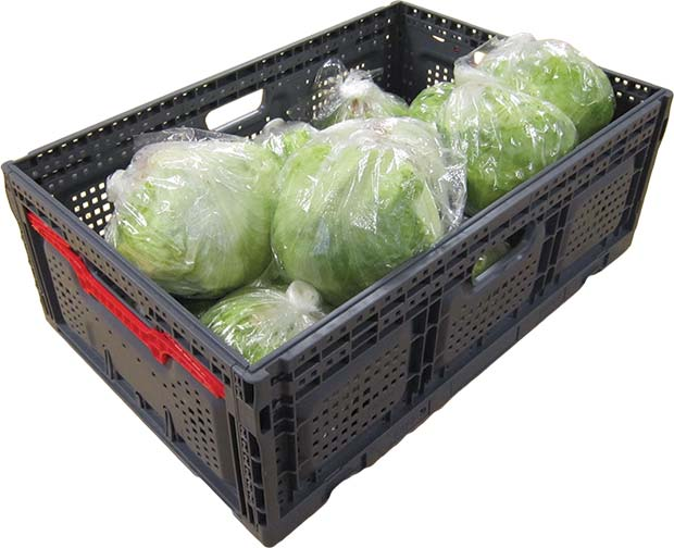02-FC6422--High-Three-Quarters-with-Lettuce-WEB