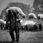 Sheep and their shepherds (4): so the church became the parachurch…