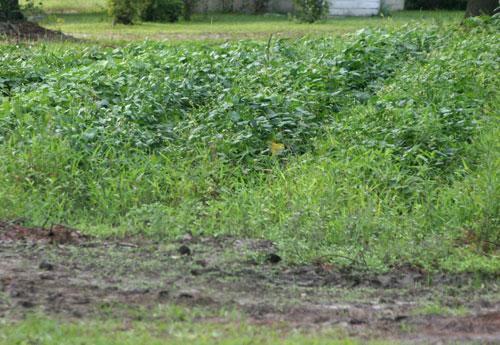 Marriage (1): untended gardens grow weeds