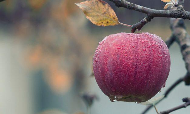Bearing fruit in difficult seasons