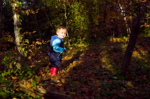 Young boy exploring Sydenham Woods in Autumn photographed by Anna Hindocha/Warm Glow Photo.