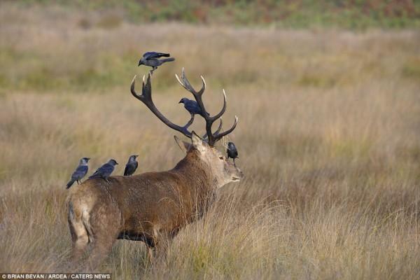 10_birdsonthemoose