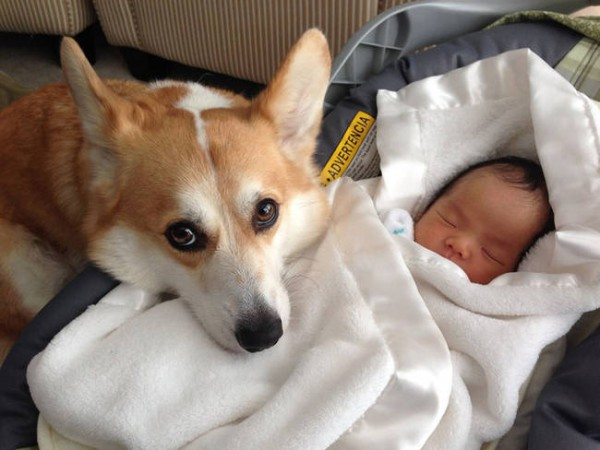 00_dog-and-baby