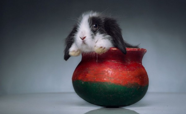 13_animal-In-Cup