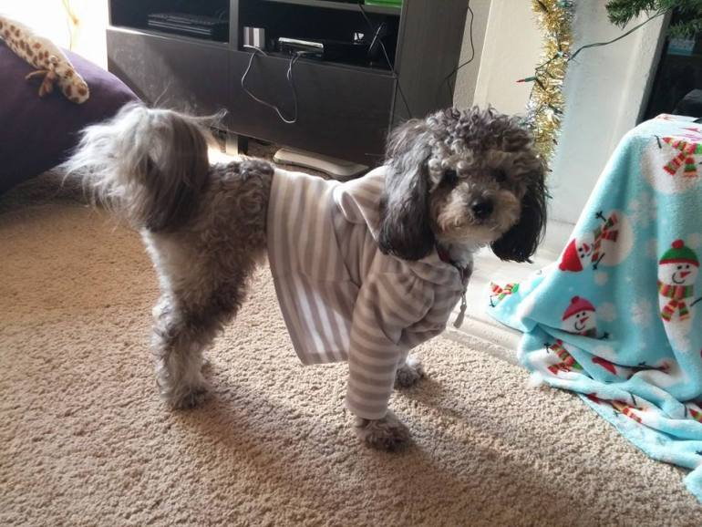 "This is my dog wearing my nieces sweater. I think he looks fabulous. He thinks he looks fabulous. He also agrees with my social media stance. He's also an advocated for ""Give Peanut Butter To A Brother"" a puppy club designed to treat more dogs with peanut butter. Another stance I can agree with."