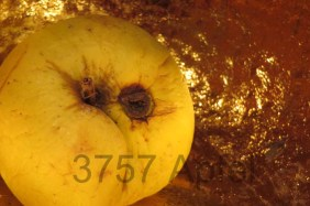 Apfel vor Gold