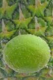 Limone vor Ananas (1)