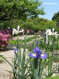 Flowers bloom near the pond on the grounds of Dazaifu Tenmangū (May 2010)