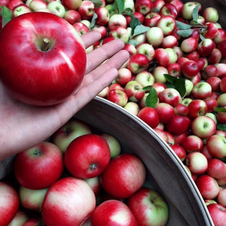 An apple a day keeps the doctor away 🍎 NEW SEASON apples at the ready from @fankhauserapples this Saturday 🙌 📷: @maranawulff