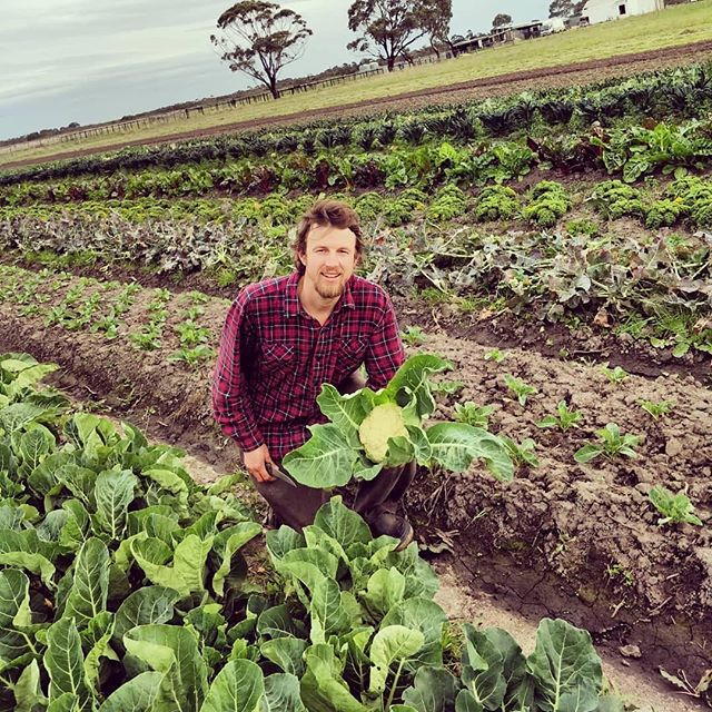 As the weekend approaches Paul from @thrivingfoodsfarm is out in his Koo-Wee-Rup organic paddock getting ready to harvest his broccoli, cauliflower, silverbeet, rainbow chard and lots of other seasonal, super fresh, spray free goodness on offer!!! and remember folks 💗🌱💗