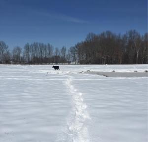A scene from Tucker Farms.
