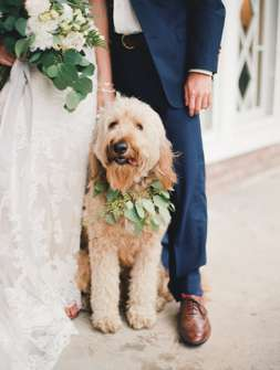 Dog with eucalyptus colar for the wedding at Warrenwood Manor