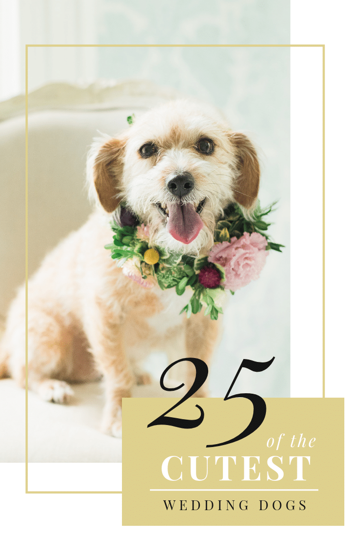 25 of the cutest wedding dogs