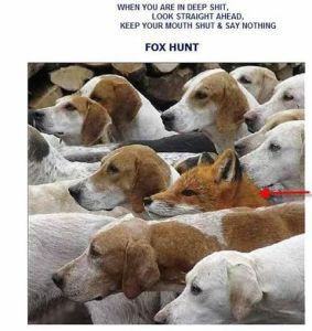 The Fox |Hunt