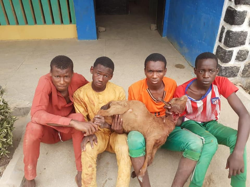 Four teenagers arrested for allegedly stealing goats in Kano