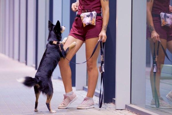 modna obroża dla psa czarna z kolorowymi okuciami w kolorze różowego złota