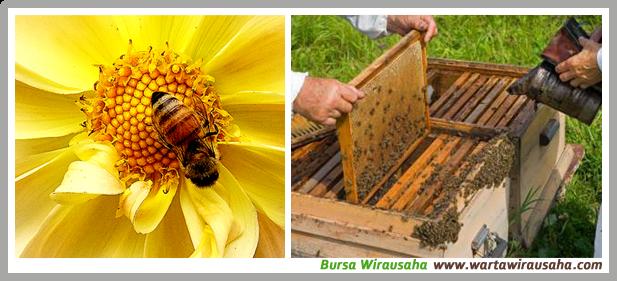 Jual Madu dan lebah Madu Ternak