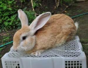 wirausaha-ternak-kelinci
