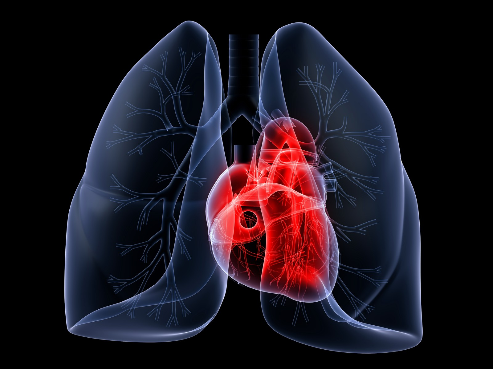 Lungs And Heart The Only Known Cure For Pulmonary