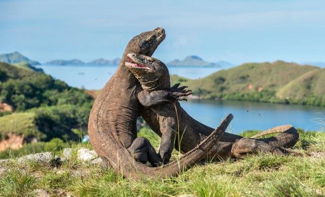 pulau rinca,taman nasional komodo,jurassic park di pulau rinca,labuan bajo