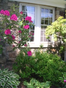 EH Windo Rhododendron