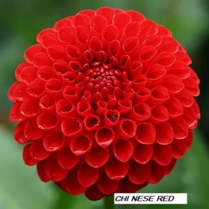 Chi nese Red