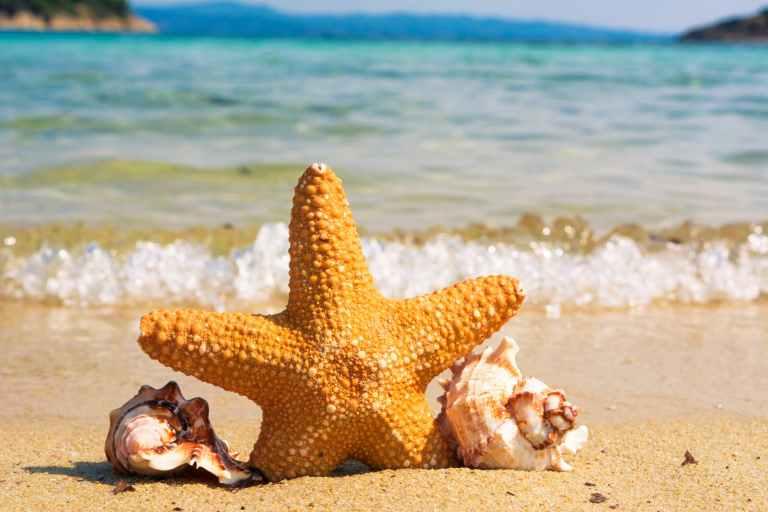 closeup of starfish