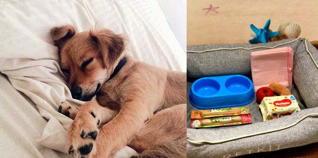 dog on bed and welcome gift set