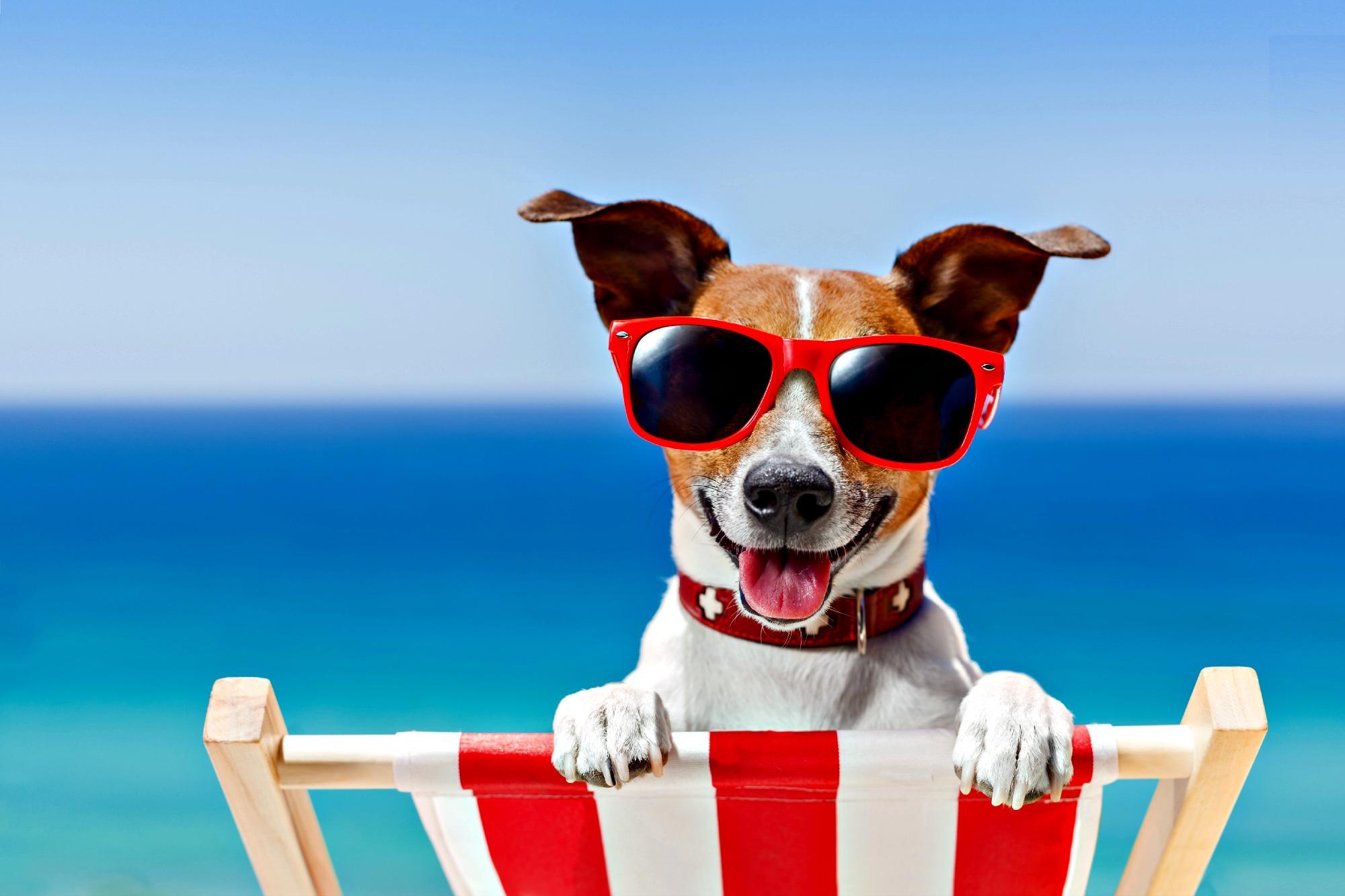 sunglass dog on beach chair