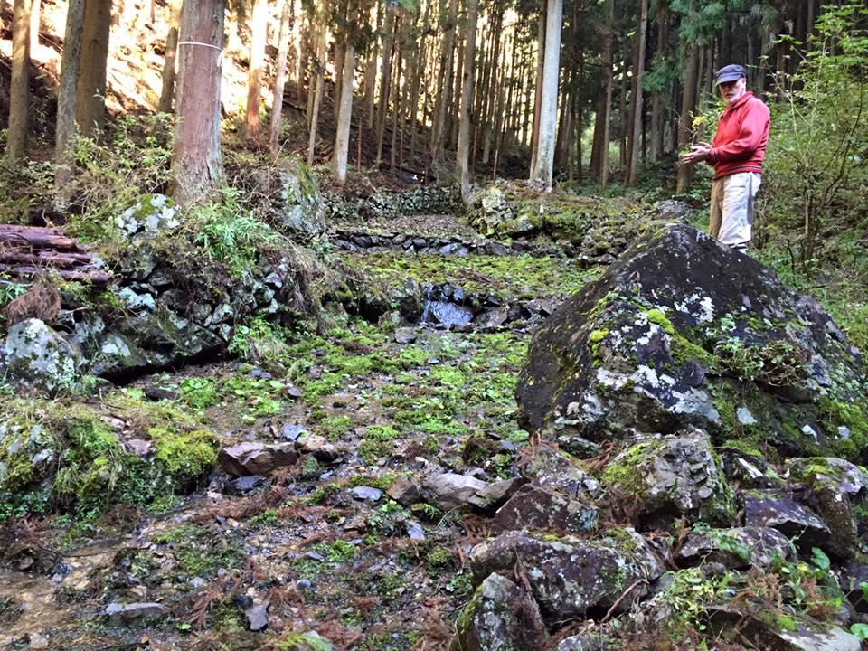 Old Wasabi growing terrace in Japan amongst trees.