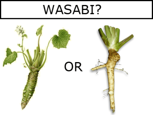 Physical differences between horseradish and Wasabia japonica (Wasabi)