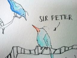 Sir Peter fragt sich durch