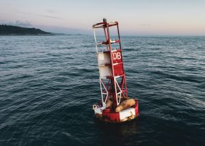 Photo of sea lions on buoy