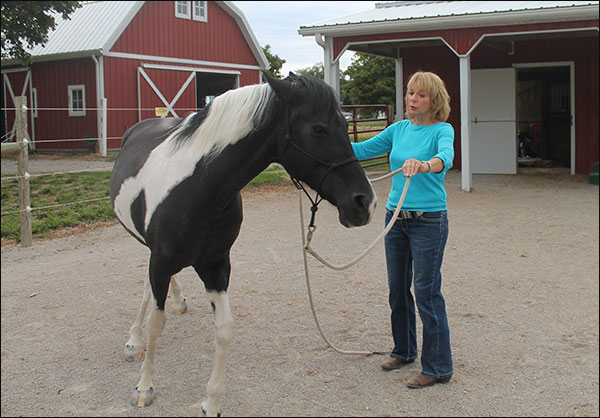 Experiential training with horses