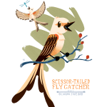 Illustration of one of Oklahoma's state symbols, the bird known as the Scissor-tailed Flycatcher
